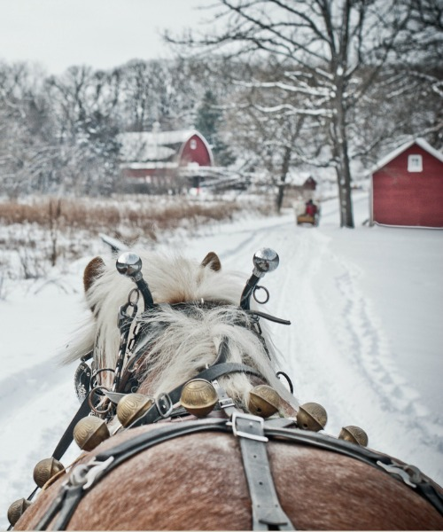 Winter sleigh ride winter wonderland.