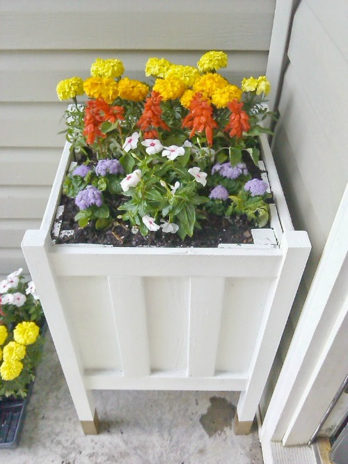 $8 gold dipped planter and lots of other summer ideas1