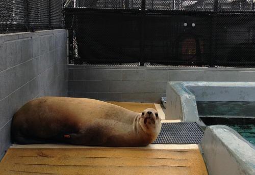 The-Marine-Mammal-Center-2