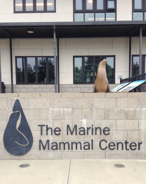 Learn more about the rescue and rehabilitation efforts of The Marine Mammal Center.