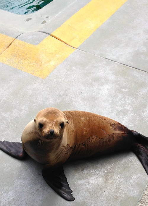 Learn more about The Marine Mammal Center and their dedication to rescuing and rehabilitating marine mammals.