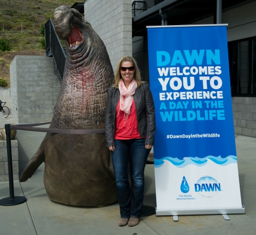 The Marine Mammal Center.