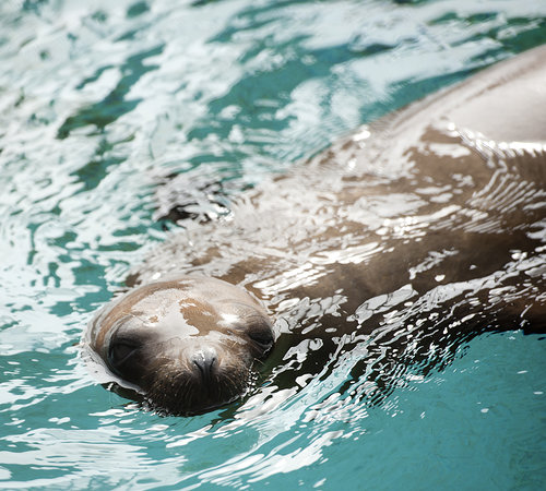 The Marine Mammal Center