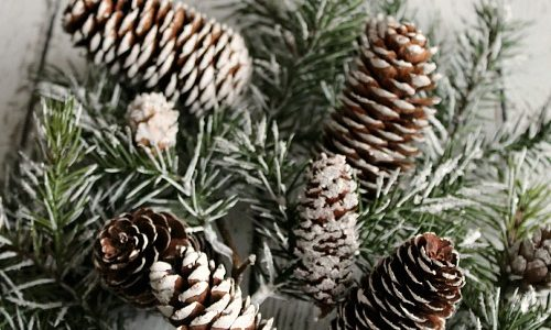 DIY Snow Covered Branches and Pine Cones