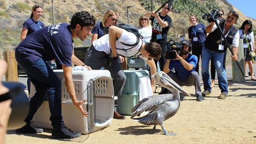 World Animal Day with International Bird Rescue.