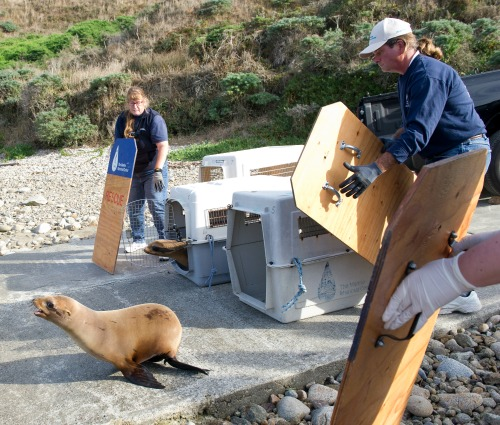 The Marine Mammal Center
