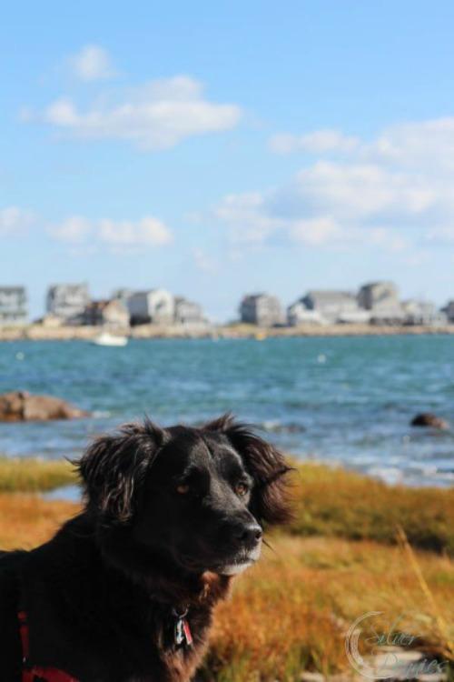 Poppy-Beach1-400x600