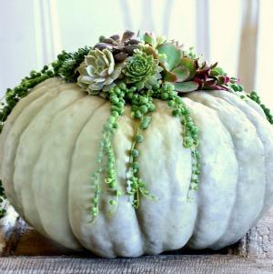 Succulent pumpkin planter.