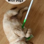How to Keep Your House Clean with Dogs