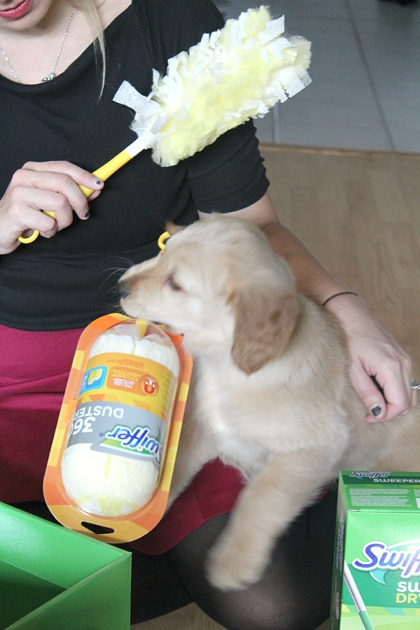 Great tips for keeping your house clean with dogs or other pets!