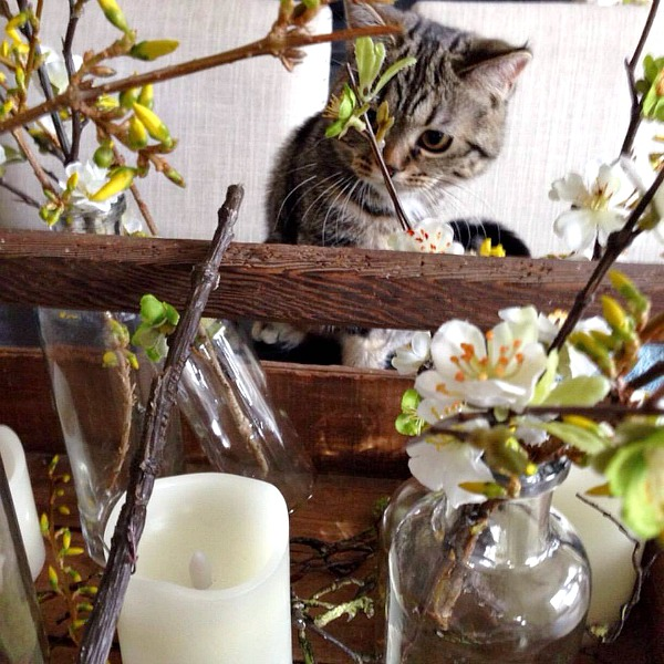 Spring tablescape ideas.