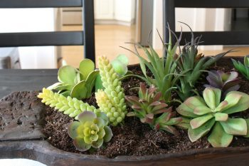 Dough Bowl Succulent Planter