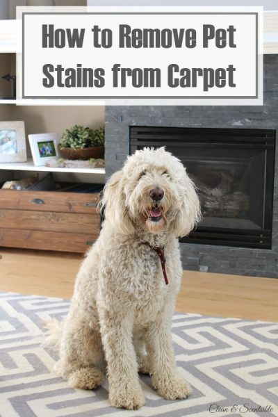 Three ways to clean pet stains from carpet - some great tips!
