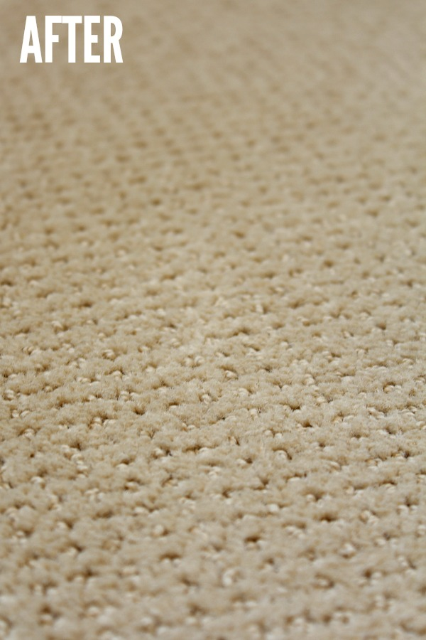 Great tips on how to remove pet stains from carpets.
