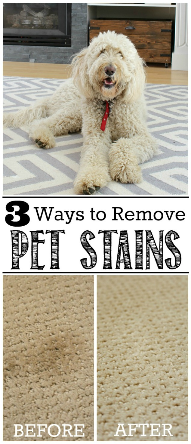 Great ideas for how to remove pet stains from carpets. Works well for other stains too!