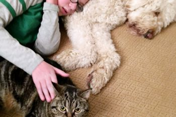Pet Cleaning Tips {and Free Pet Care Printables}