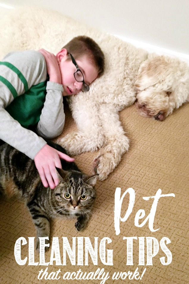 Pet Cleaning Tips and Tricks. Great ideas to clean up after your pets and keep your home clean and smelling fresh.