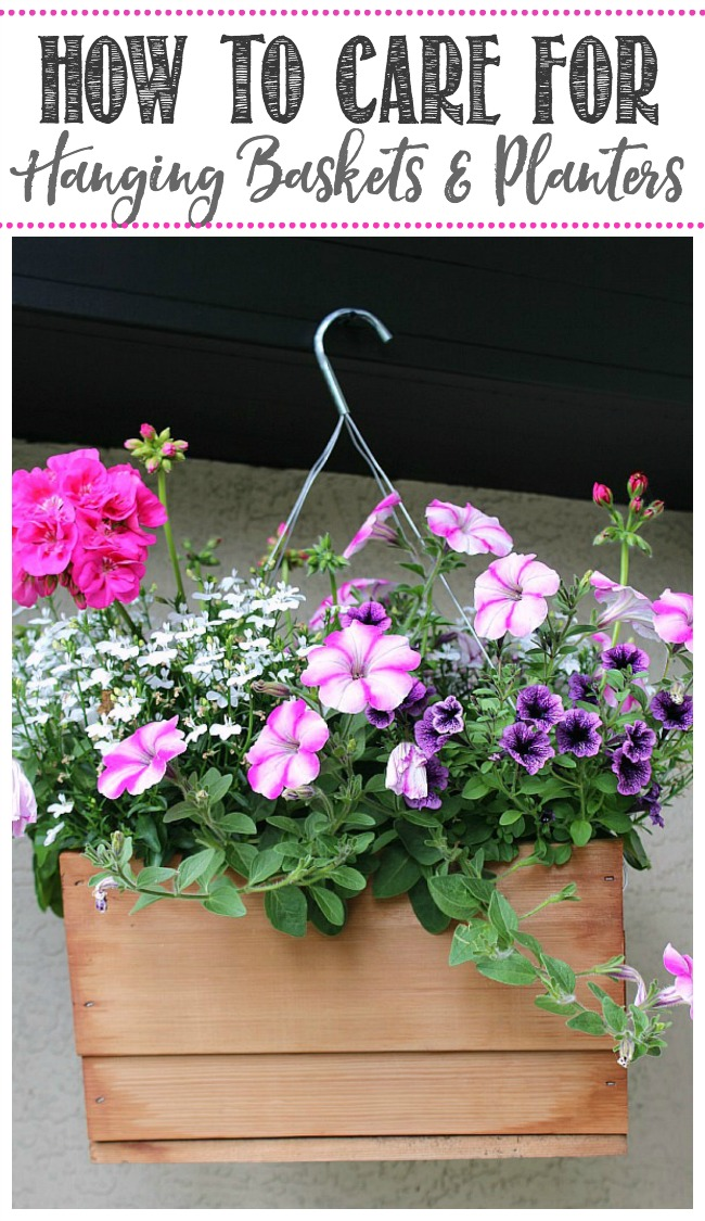 Pretty summer hanging basket with pink and purple flowers.