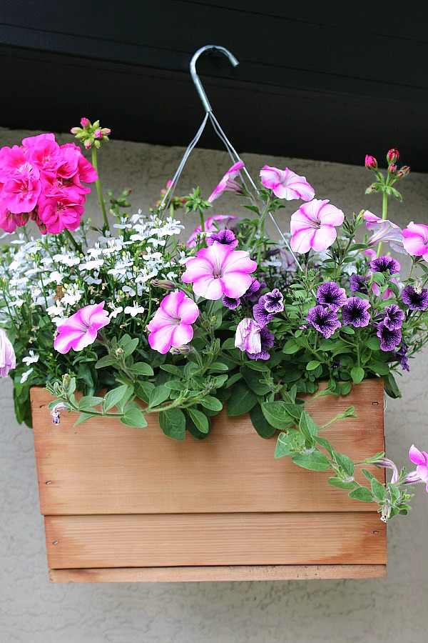 Hanging basket in wooden planter.