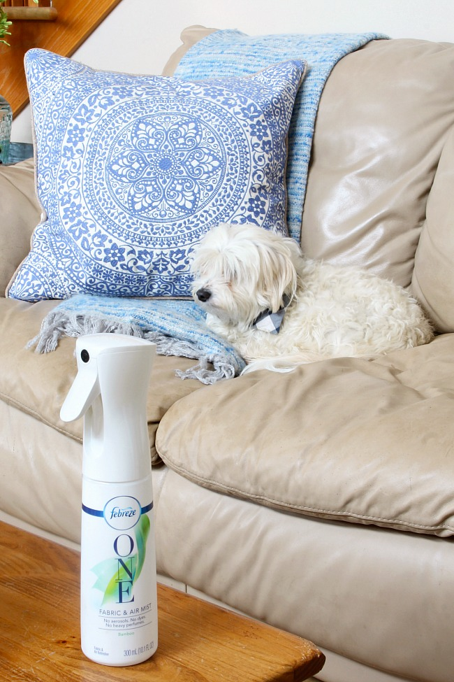 9 Ways to Use Febreze. Cute dog on a sofa with Febreze One.