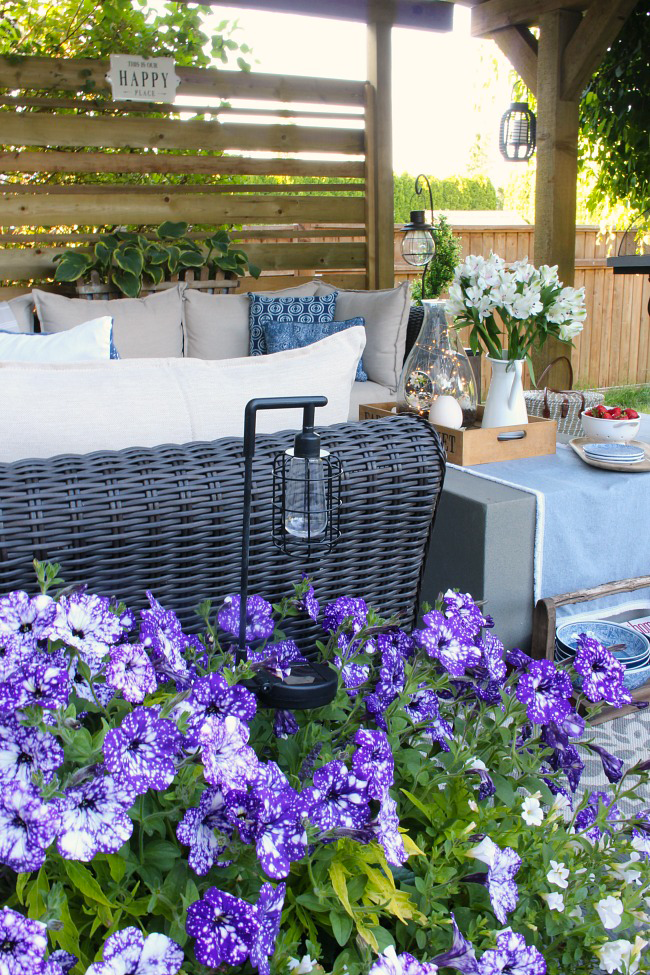 Purple petunias on a pretty summer patio.