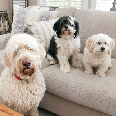 Cute photo of three dogs on a sofa.