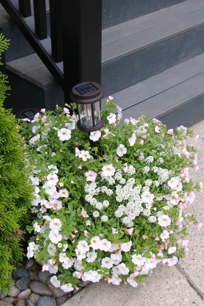 Summer planter with white flowers.