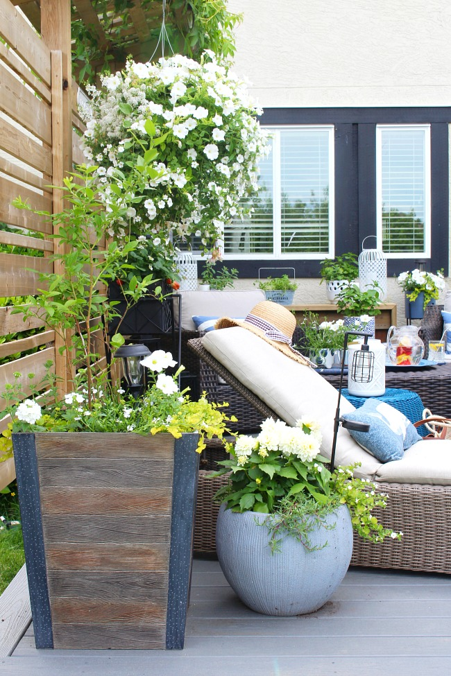 Outdoor resin lounger on a backyard patio space with white flowers.