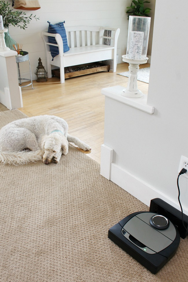 Neato D7 vacuum in its docking station with a cute dog.