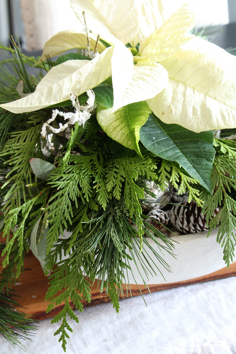 Beautiful DIY Christmas centerpiece made from a poinsettia and fresh greenery.