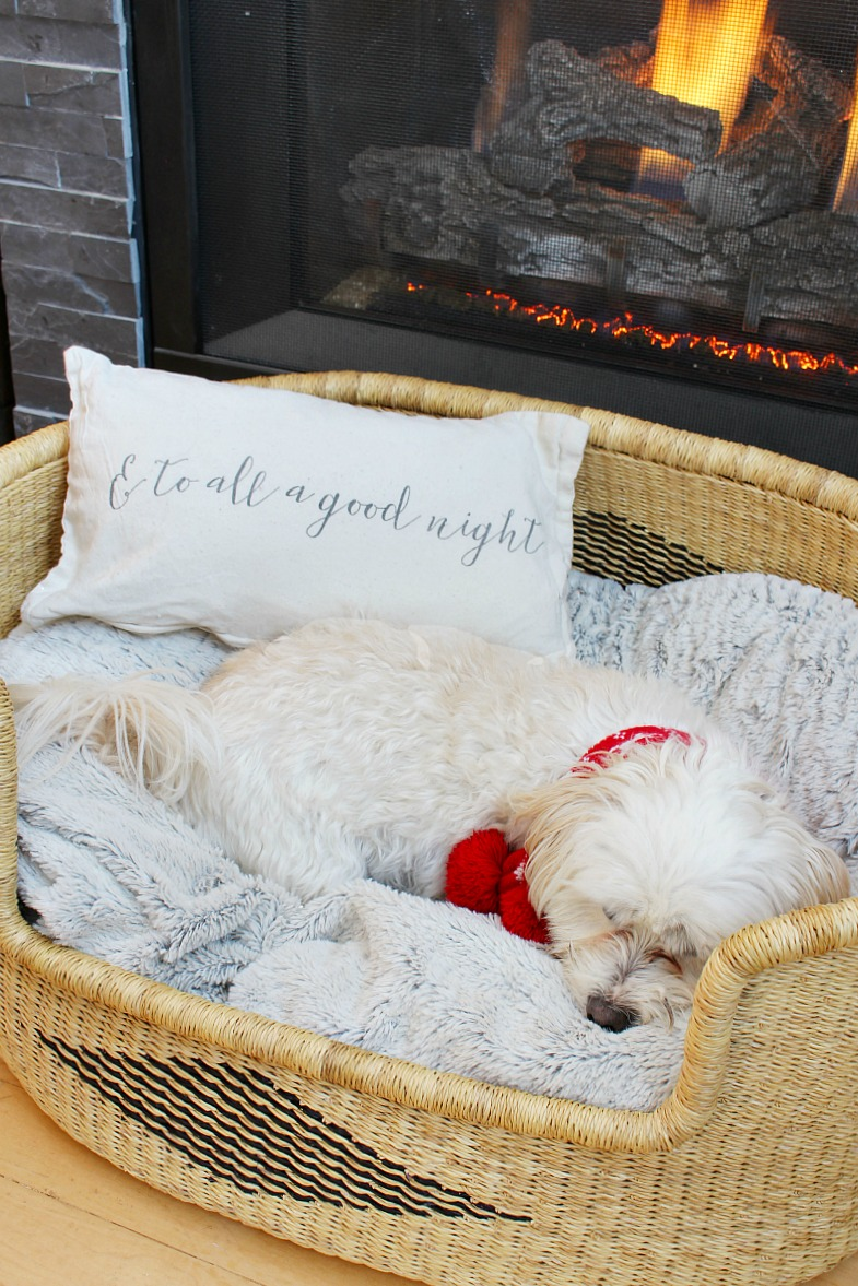 Small white dog in a woven dog bed with Christmas pillow.