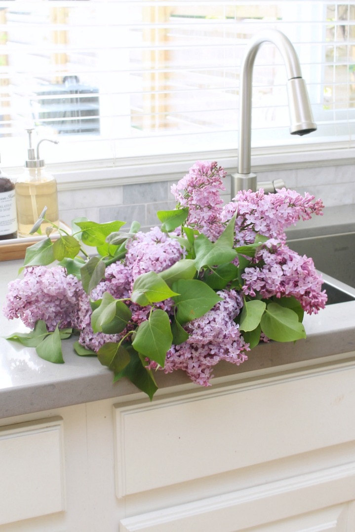 Fresh cut lilacs in the kitchen sink.