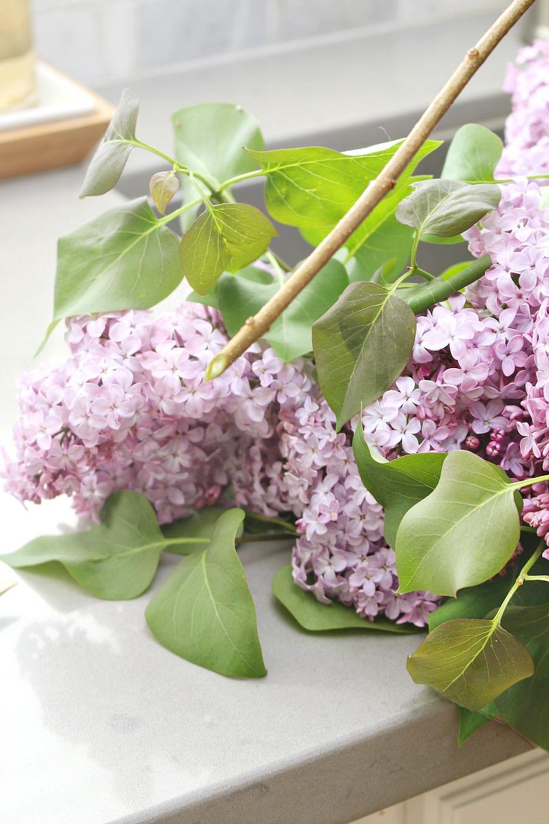 Fresh cut lilacs.
