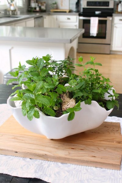 Herb planter centerpiece in a white bowl for an easy summer centerpiece.