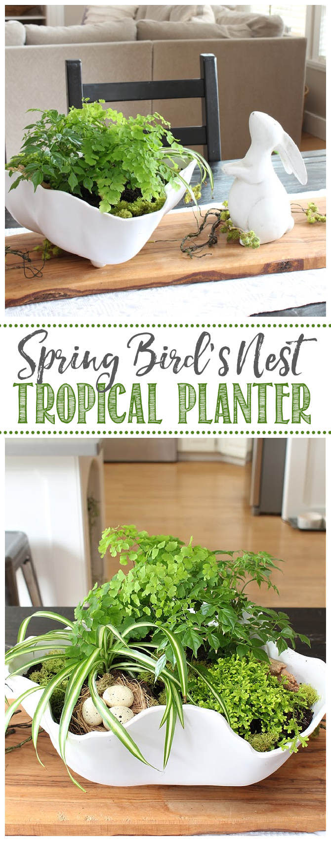 Spring tropical planter with little bird's nest.