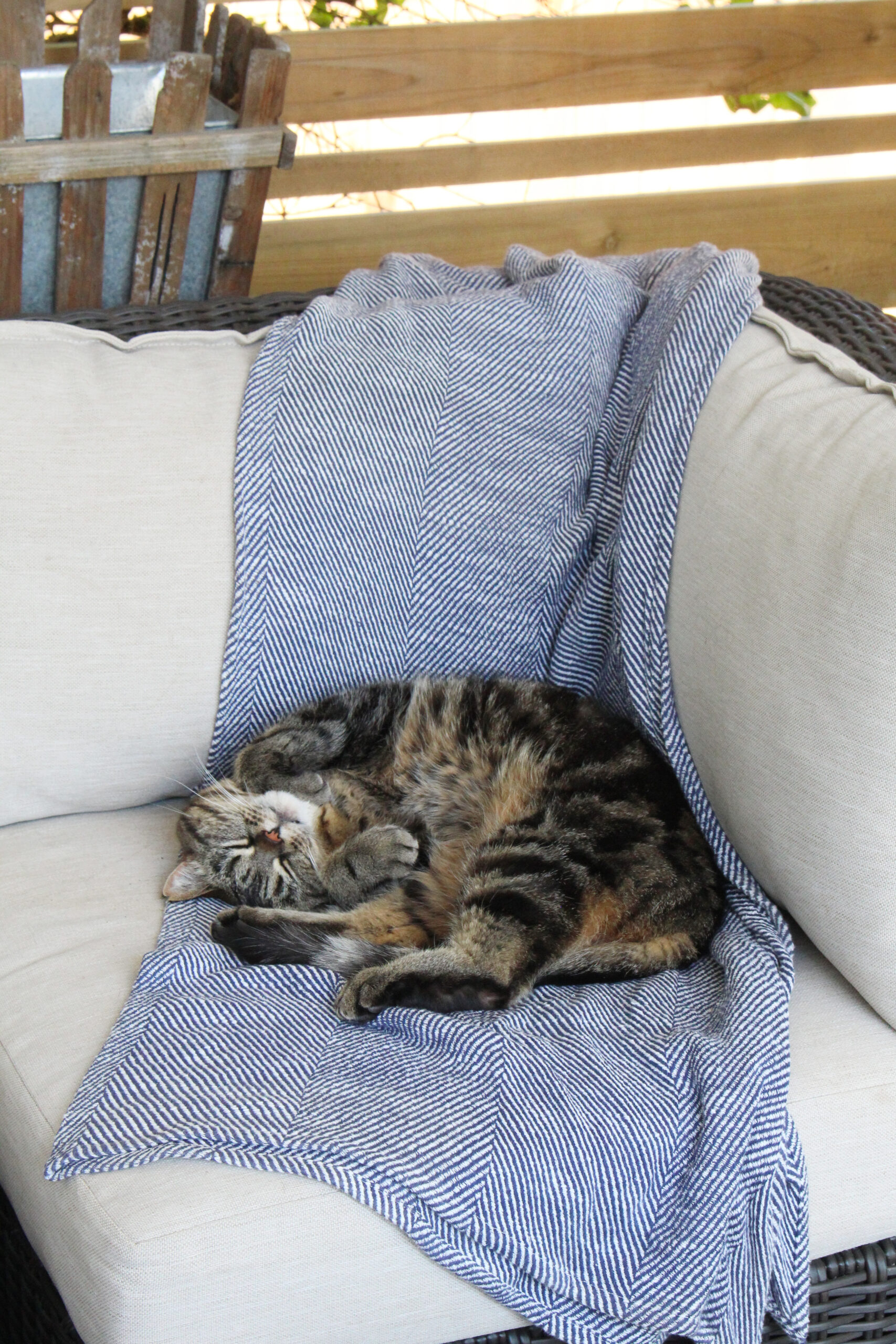 Cat curled up on an outdoor sectional.