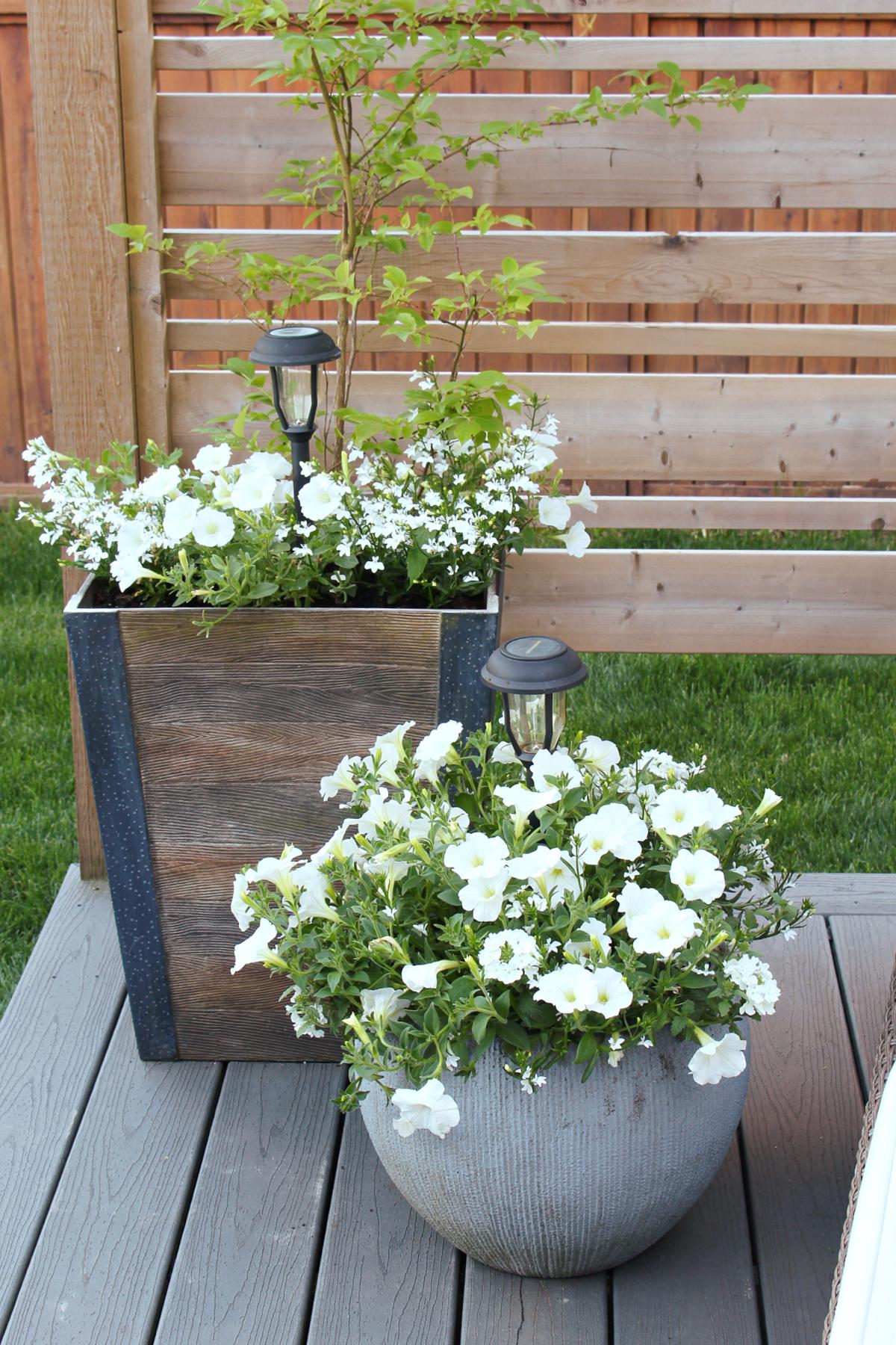 Beautiful white summer flower planters.